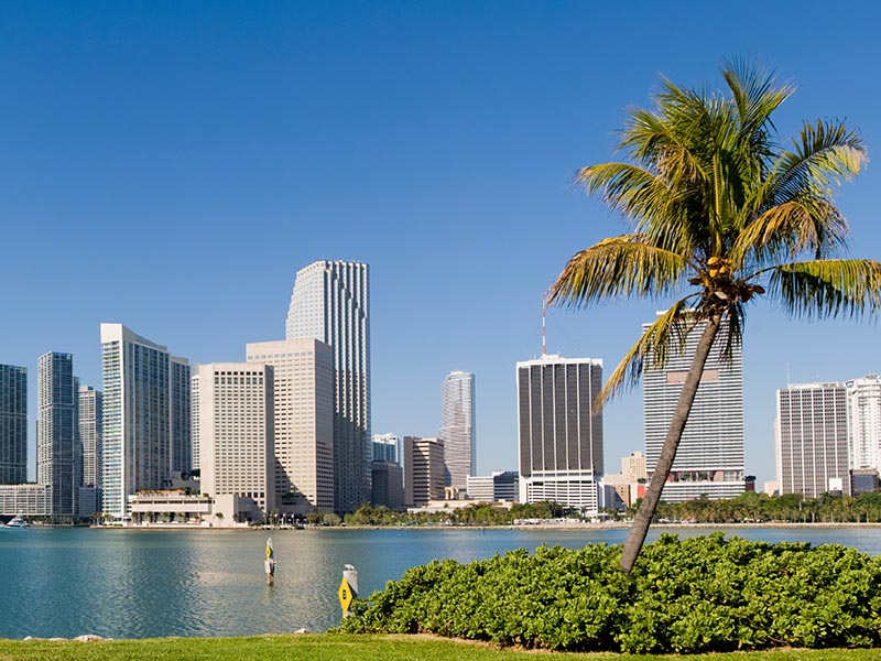 miami skyline with palm tree